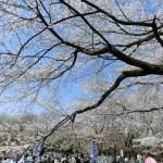 [公園] お花見@光が丘公園