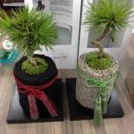 [買物] 贈り物にもピッタリ。招集グリーン「eco-pochi」の苔玉を購入!